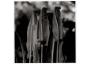 Fougères scolopendres, La Burthe
